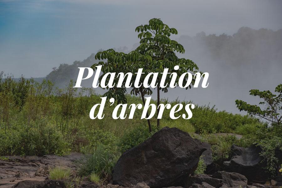Des arbres plantés